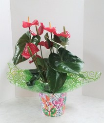 Red Anthurium from Aladdin's Floral in Idaho Falls