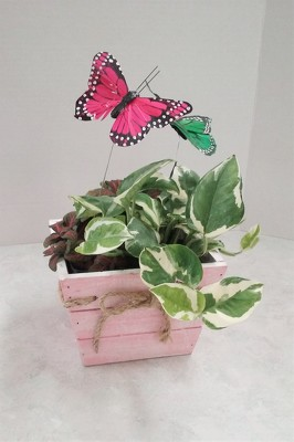 Butterfly Box from Aladdin's Floral in Idaho Falls