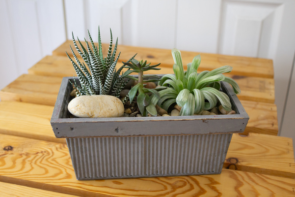 Succulent Planter from Aladdin's Floral in Idaho Falls