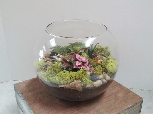 Terrarium from Aladdin's Floral in Idaho Falls